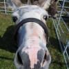 donkey's head